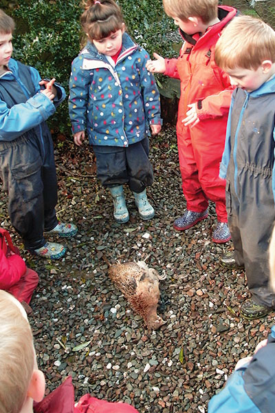 children looking at a pheasant